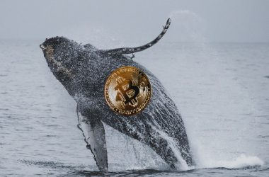 crypto whale bitcoin