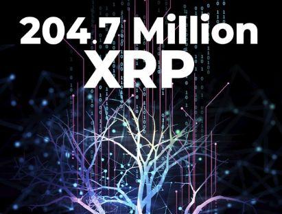 204.7 XRP